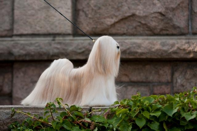 Best in Show - Winners of tht International Dog Show Seinajoki (Finland), 24 - 25 October 2015